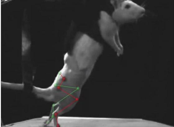 Elektronische Dura passt sich Bewegungen des Rückenmarks an
