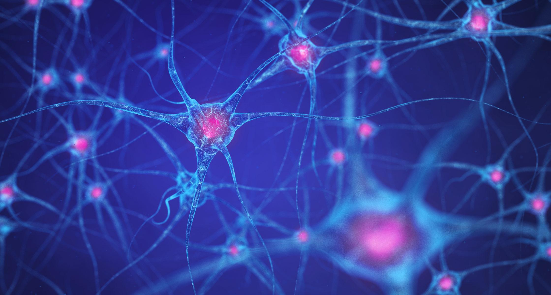 Wie die Verdrahtung der Hirnzellen sich ausbildet