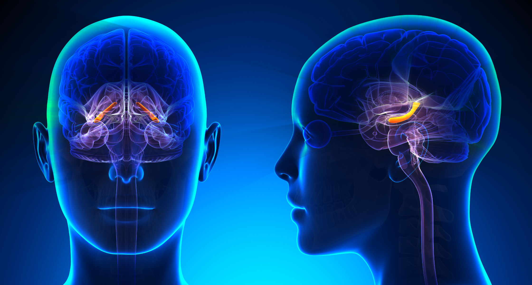 Neubildung von Hirnzellen nur bis zur Pubertät möglich